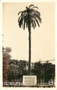 Serra Palm, 1925