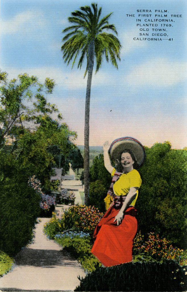 Serra Palm postcard